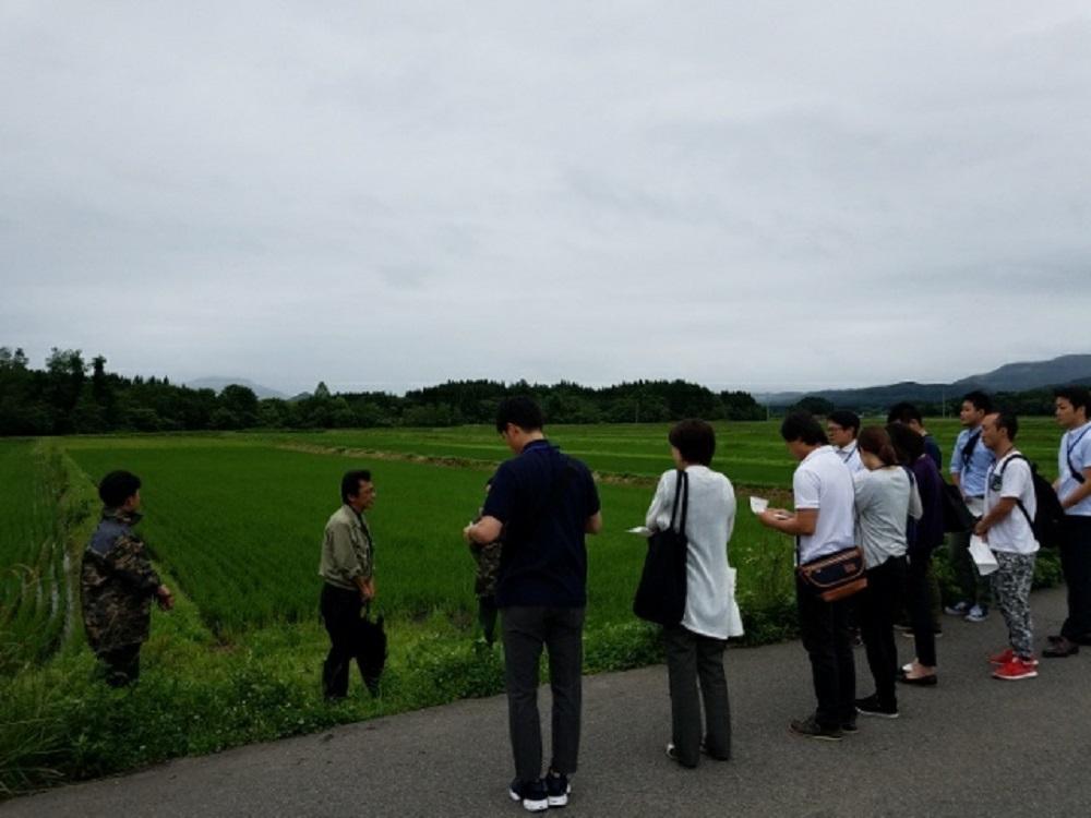 JAかづの管内の飼料用米圃場視察